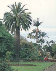 Around 1984 with her fellow palm survivors form the Raddenberry fernery