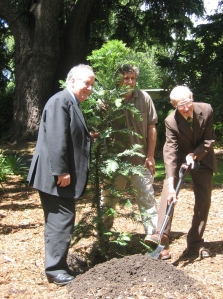 George Jones planting the Wollemi Pine on December 7 2005